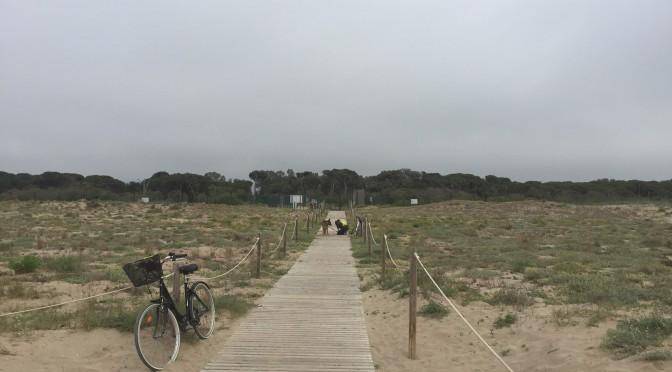 "<span lang =""ca"">Entrenament 13 Km anada i tornada platja Viladecans</span>"