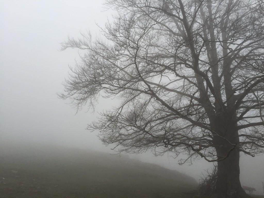 arbre Montseny pistarunner